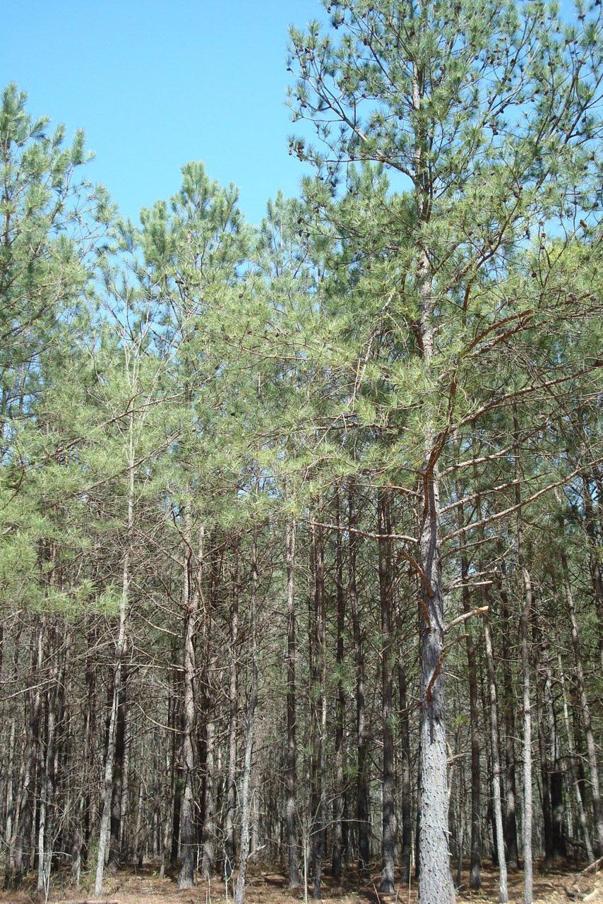 commercial-tree-grinder-progrind-2